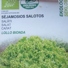 Salaatti, bataviasalaatti 'Lollo Bionda' (Luomu)