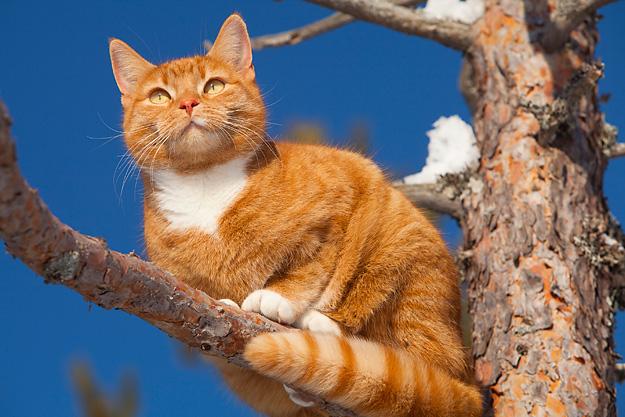 Kissa Pissaa Paljon