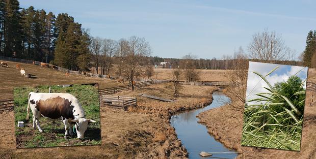 Vuoden maatiaiset 2012: Kuralan kylämäki, saarvikyyttö ja maatiaisruis