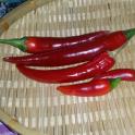 Paprika, chili 'Plamen' (Heirloom)