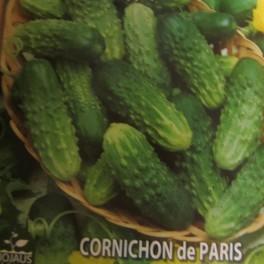 Avomaankurkku 'Cornichon de Paris' (Luomu)