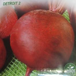 Juurikas, punajuurikas 'Detroit 2' ('Kogel 2')