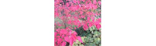 Puuvartiset kasvit